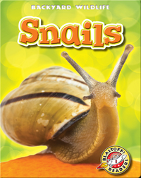 Backyard Wildlife: Snails