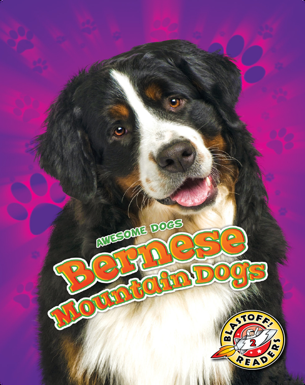 Awesome Dogs: Bernese Mountain Dogs