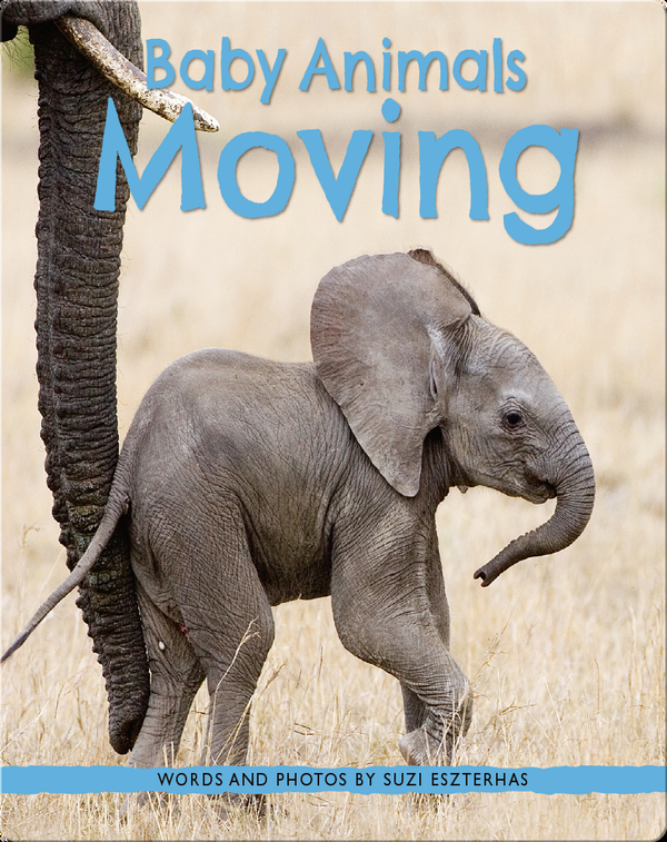 Baby Animals Moving