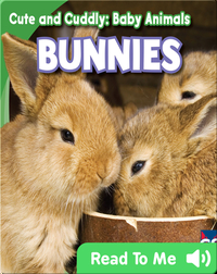 Cute and Cuddly: Bunnies