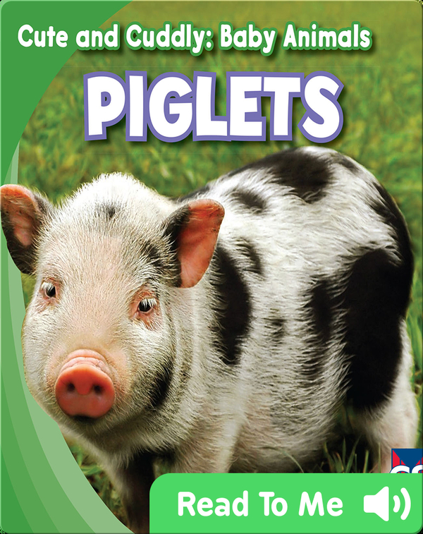 Cute and Cuddly: Piglets