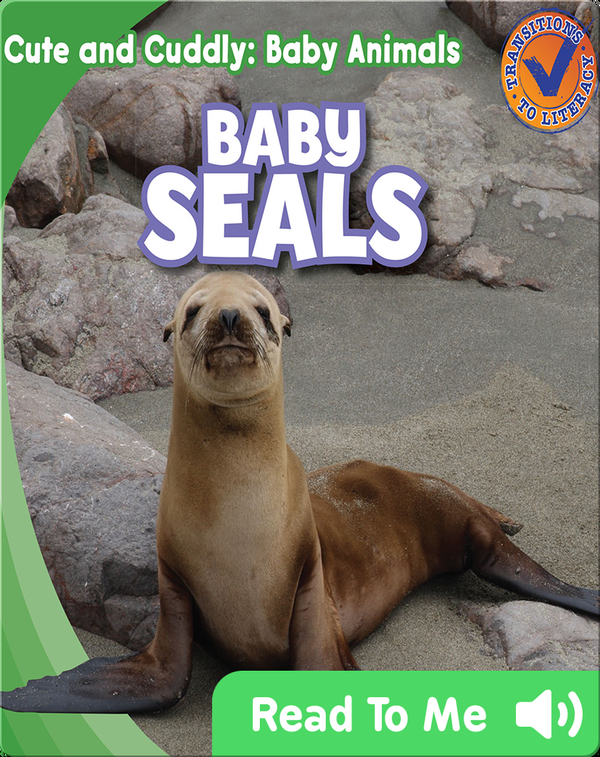 Cute and Cuddly: Baby Seals