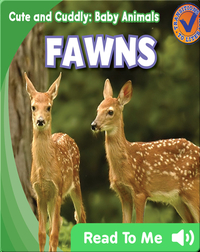 Cute and Cuddly: Fawns