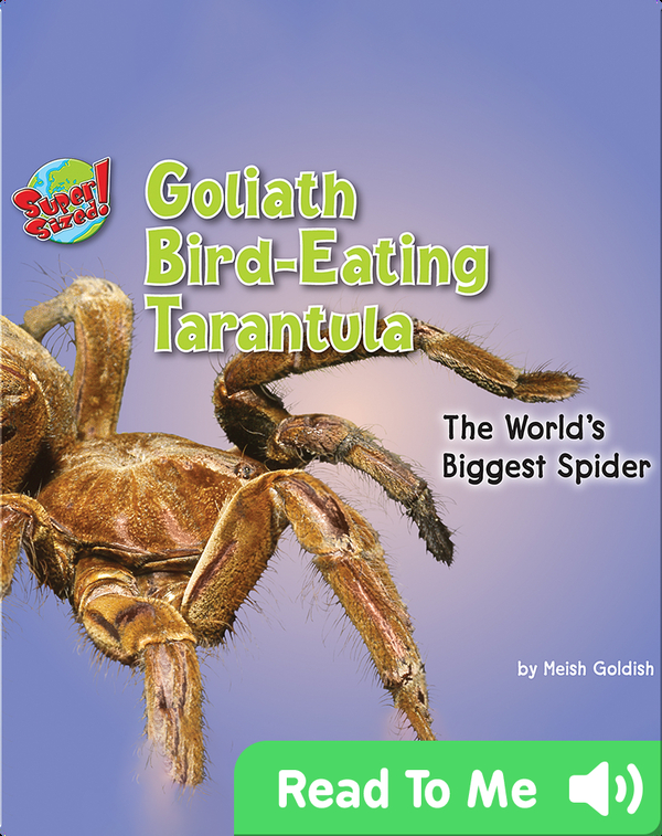 Goliath Bird-Eating Tarantula: The World's Biggest Spider