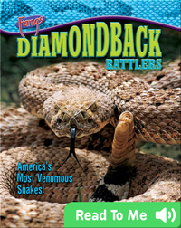 Diamondback Rattlers: America's Most Venomous Snakes!
