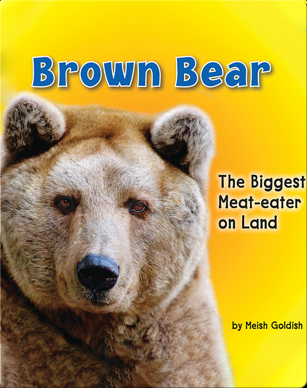 Brown Bear: The Biggest Meat-eater on Land