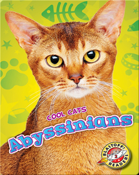 Abyssinians