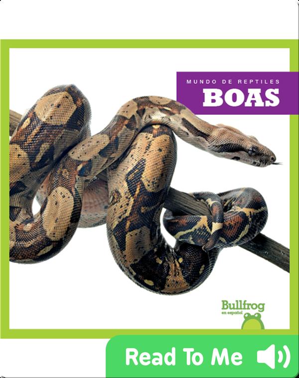 Boas (Boa Constrictors)