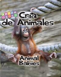 Cría de animales / Animal Babies