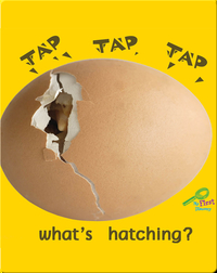 Tap, Tap, Tap… What's Hatching?