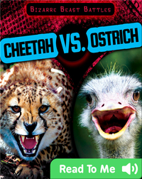 Cheetah vs. Ostrich