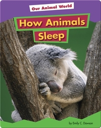 How Animals Sleep