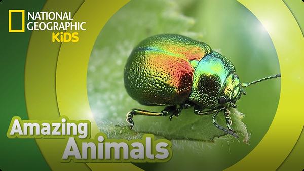 Amazing Animals: Beetle