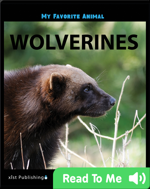 My Favorite Animal: Wolverines