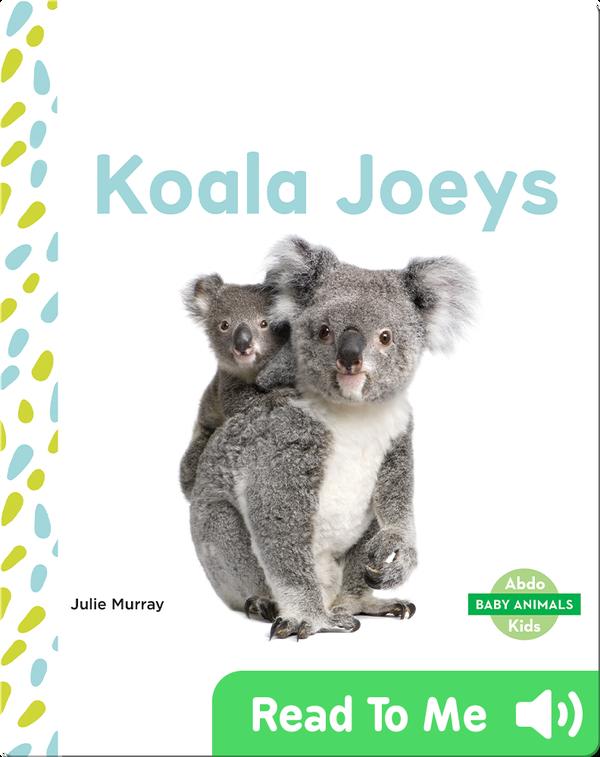 Koala Joeys