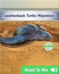 Leatherback Turtle Migration