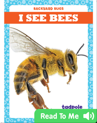 I See Bees