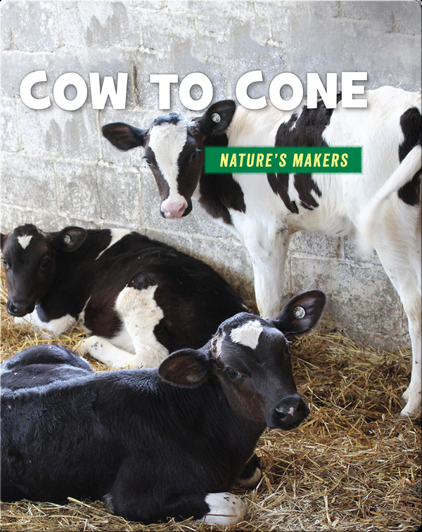 Cow to Cone