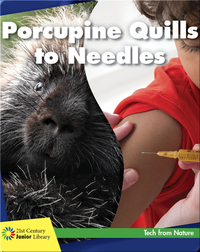 Porcupine Quills to Needles