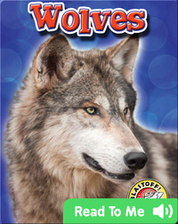 Wolves: Backyard Wildlife