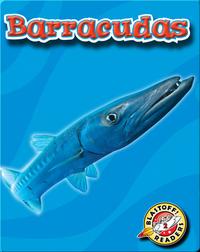 Barracudas: Oceans Alive