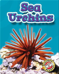 Sea Urchins: Oceans Alive