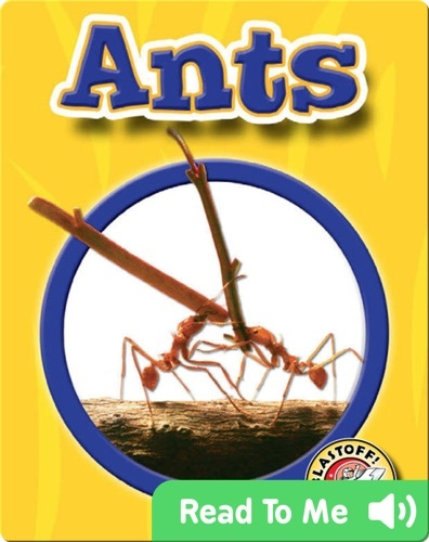 Ants: World of Insects