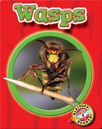 Wasps: World of Insects