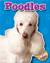 Poodles: Dog Breeds