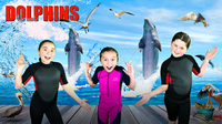 All About Dolphins!