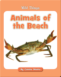 Animals of the Beach