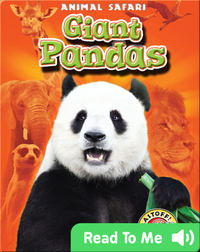 Giant Pandas: Animal Safari