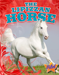 The Lipizzan Horse