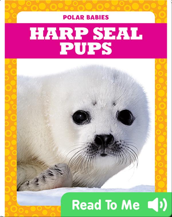 Polar Babies: Harp Seal Pups