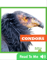 Raptor World: Condors