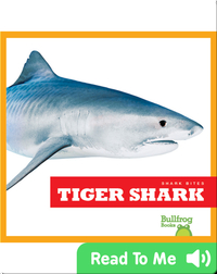 Shark Bites: Tiger Shark