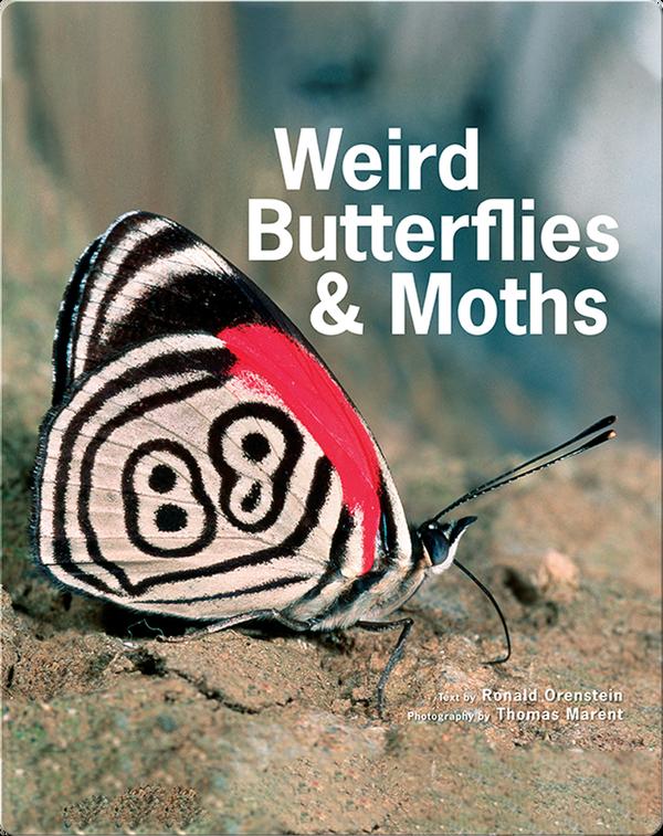 Weird Butterflies and Moths