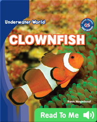 Underwater World: Clownfish
