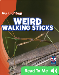 Weird Walking Sticks
