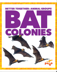 Bat Colonies