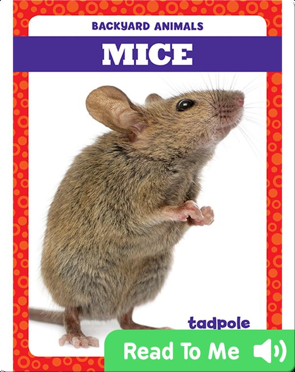 Backyard Animals: Mice