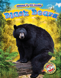 Animals of the Forest: Black Bears