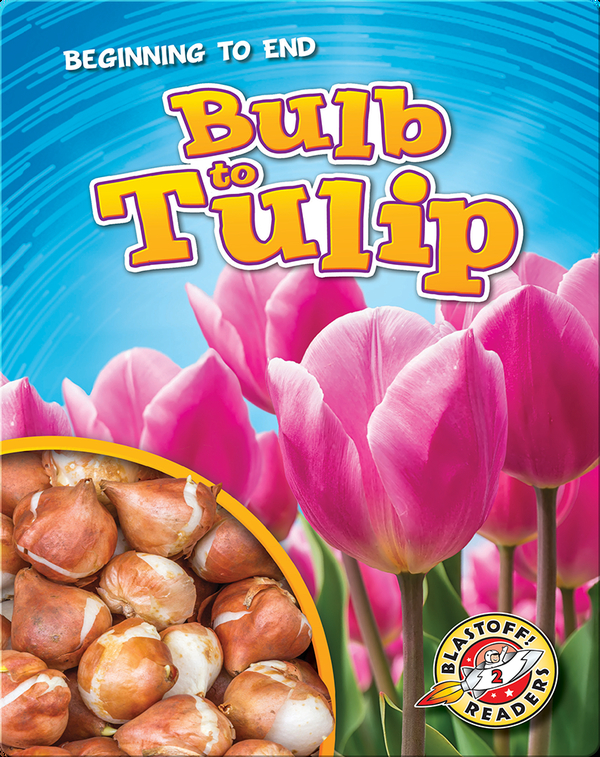 Bulb to Tulip