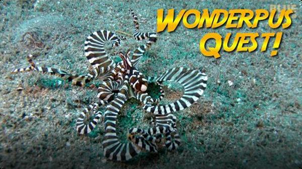 Jonathan Bird's Blue World: Wunderpus Octopus Quest!