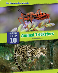 Top Ten Animal Tricksters