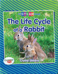 Full STEAM Ahead!: The Life Cycle of a Rabbit