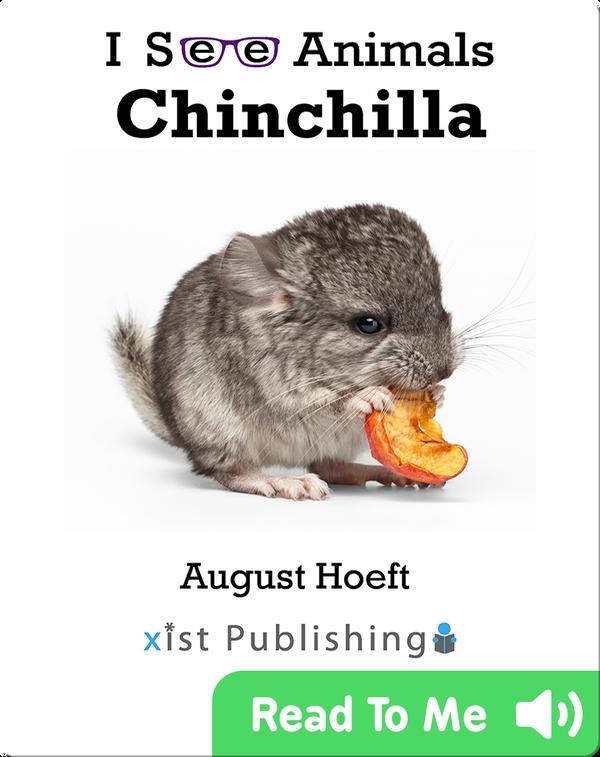 I See Animals: Chinchilla