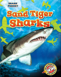 Shark Frenzy: Sand Tiger Sharks