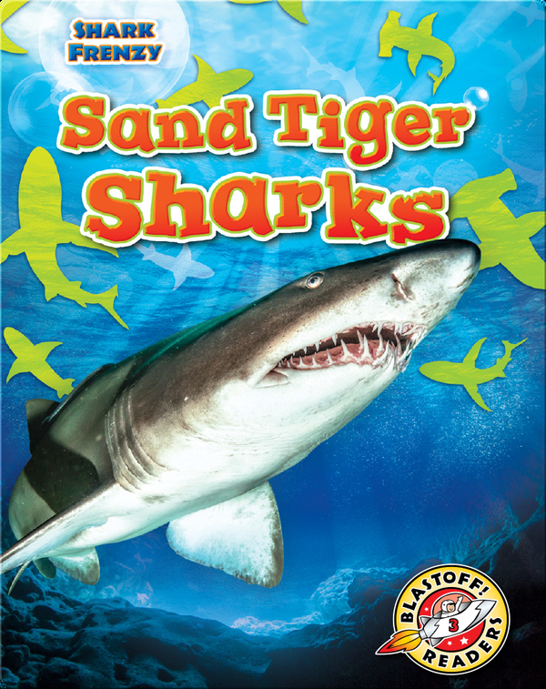Shark Frenzy: Sand Tiger Sharks