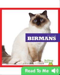Cat Club: Birmans